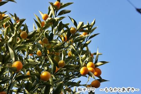 DSC01352.jpg