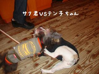6.20ワンダフルサク&テンちゃん