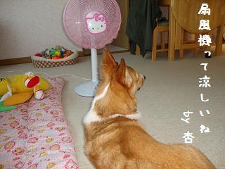 扇風機と杏