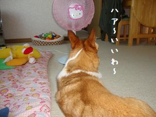 扇風機と杏2