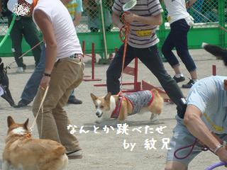 運動会 紋兄3