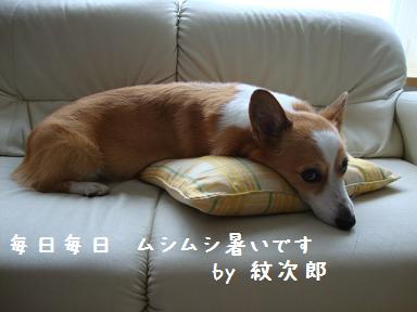 9.3紋次郎