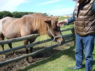 ミー父さんとお馬さん