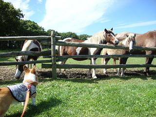 紋兄とお馬さん