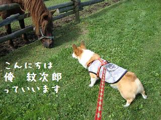 紋兄とお馬さん2