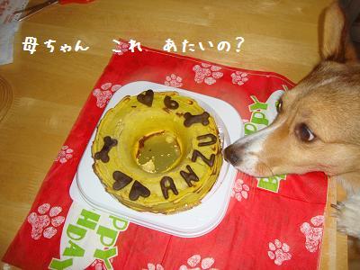 ケーキと杏