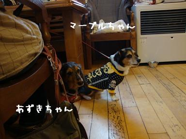 ジプシーマーブル&あずき