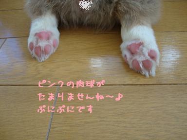かのんちゃんの足