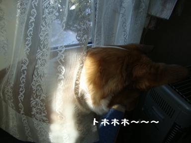 レースカーテンと杏2