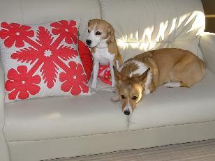 ソファーで杏&うらら朝