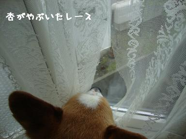 出窓から眺める紋兄