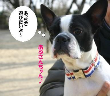 IMG_あぶさんちゃん