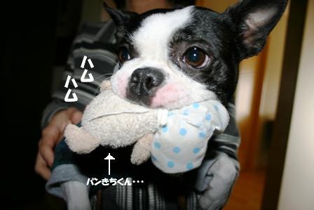 IMG_パンきち1