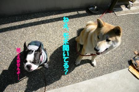 IMG_モネ福聞こえないフリ