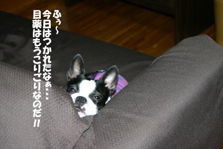 IMG_00081.jpg