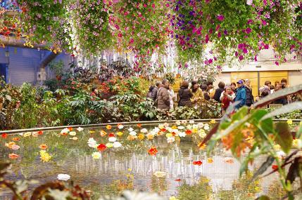 池と花2010-12-14 066