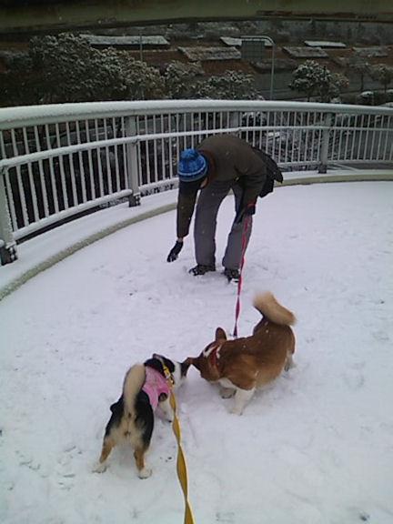 雪で遊んでます