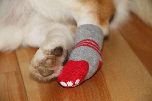 これはワンコ用靴下です