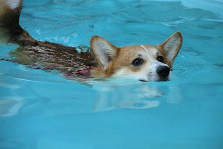 泳ぎも好きデスよ