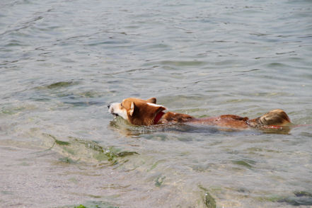 泳ぎは得意さ