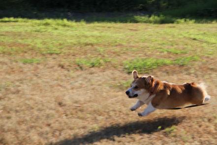 飛びます飛びます