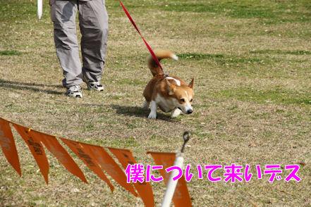 いくぜぃ!とーたん!!