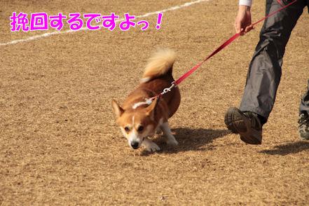 行くぜぃ!とーたん!!