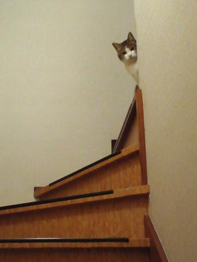階段に猫がおんねん
