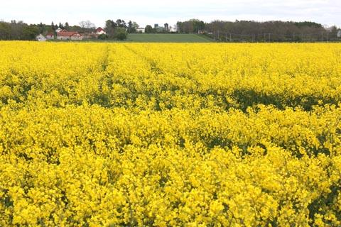 SpringinSweden01
