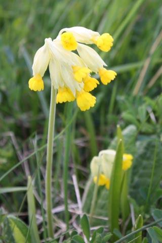 SpringinSweden02