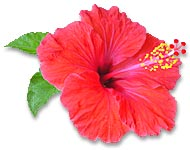 photo_hibiscus020.jpg
