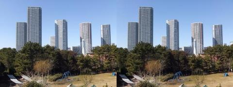 3D写真③11.02.13(交差法)