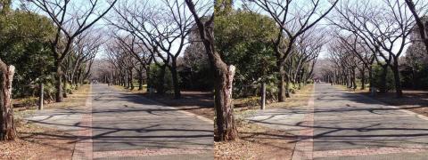 3D写真⑤11.02.13(平行法)