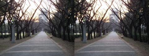 3D写真④11.02.26(交差法)