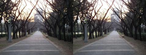 3D写真④11.02.26(平行法)