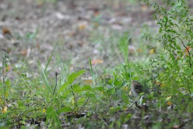 binzui20111120-029.jpg
