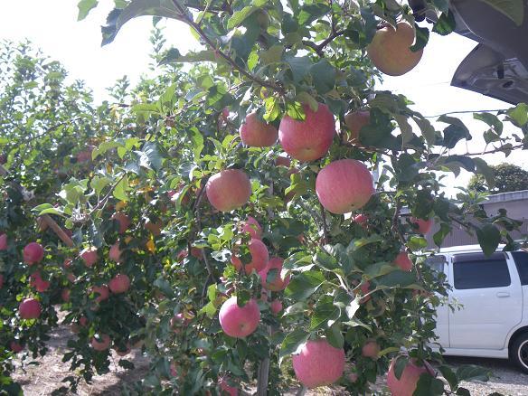 10/18リンゴ園1