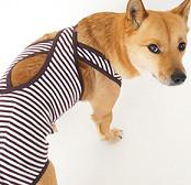 中型犬お試しバッククロスマナーパンツ