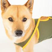 バイカラーメッシュバッククロスマナーパンツ(中型犬用)