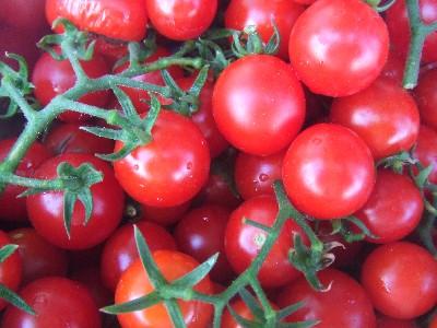 2010_0805プチトマト収穫