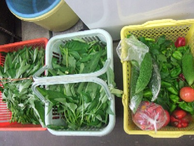 2010_0809朝採り野菜