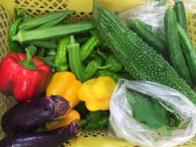 2010_0826野菜
