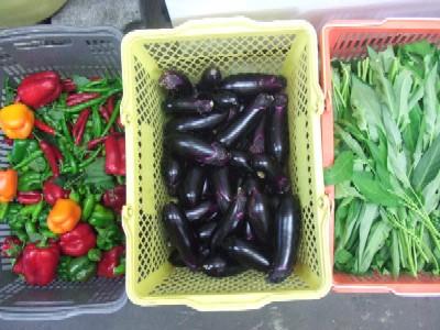 2010_0911野菜