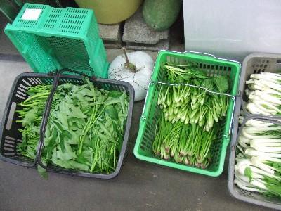 2010_1016野菜2