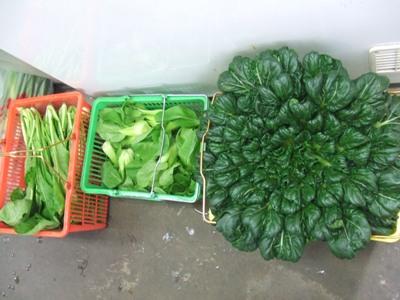 2010_1207朝採り自家菜園野菜