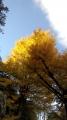 鎌倉20131130-2