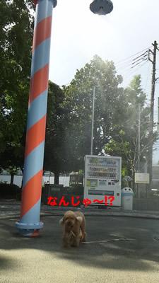20120717_3.jpg