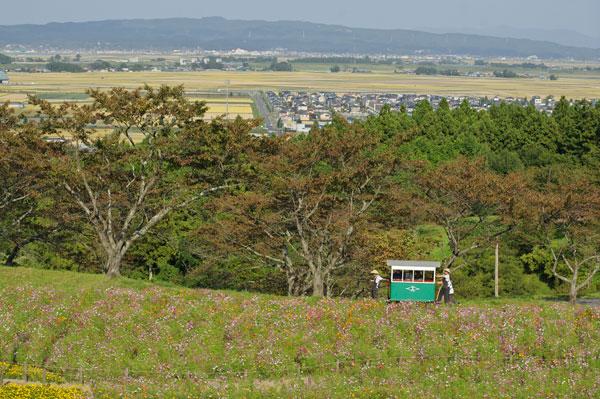 140928matsuyamajinsha4.jpg