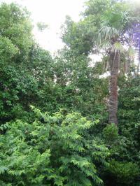 20100728林