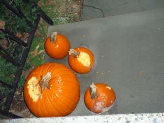 pumpkin_1011_250